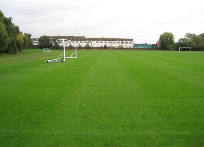 体育场草坪